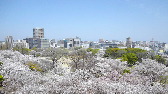 桜の時期の舞鶴公園